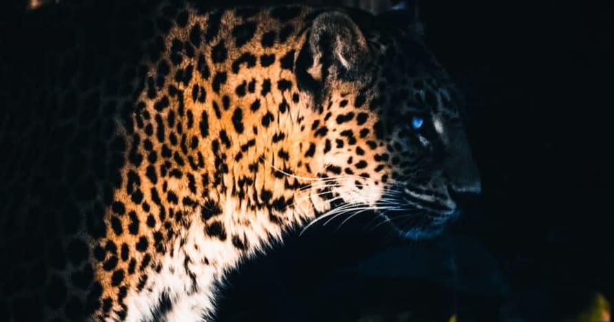 Yggdrasil Partners ReelPlay uvolní Jaguar SuperWays ze Bad Dinga